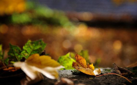 Der Herbst ist in der Stadt